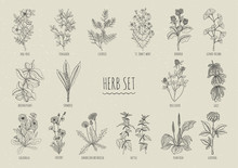 Set Of Herbs. Collection Hand ...