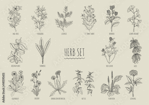 Set of herbs Fototapet