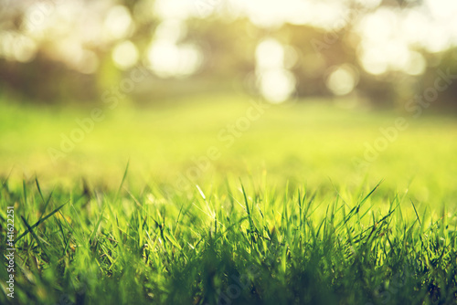 Poster de jardin Herbe Spring and nature background concept, Close up green grass field with blurred park background and sunlight.