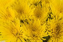 Close Up Of Yellow Daisies