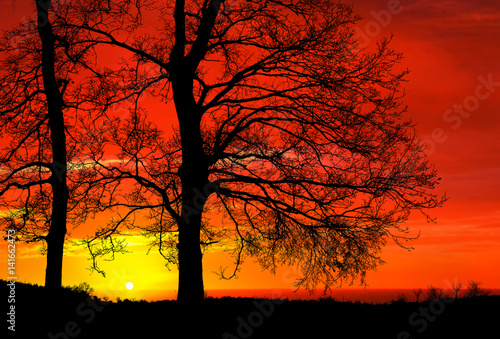 Sunset on tree