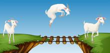 Three Goats Crossing Bridge