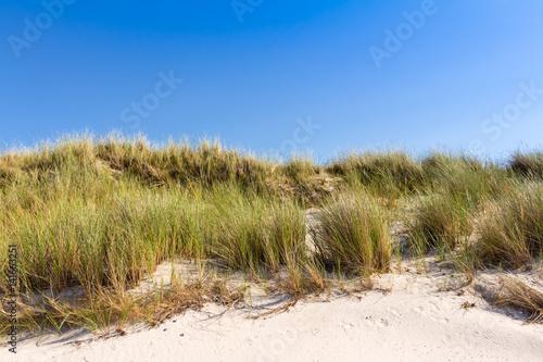 Cadres-photo bureau La Mer du Nord Beach and dunes with beachgrass