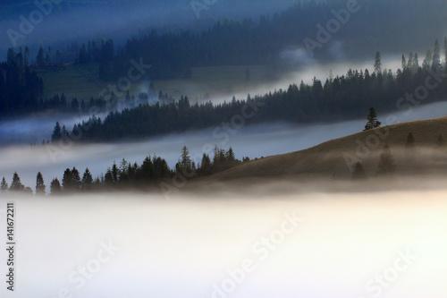 Fototapeten Wald Wiosenne Mgliste Pieniny