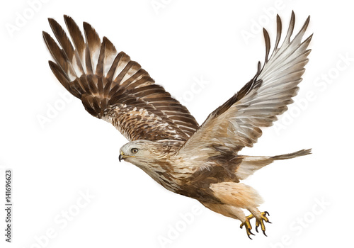 Hawk flying hand draw and paint color on white background vector illustration Canvas Print