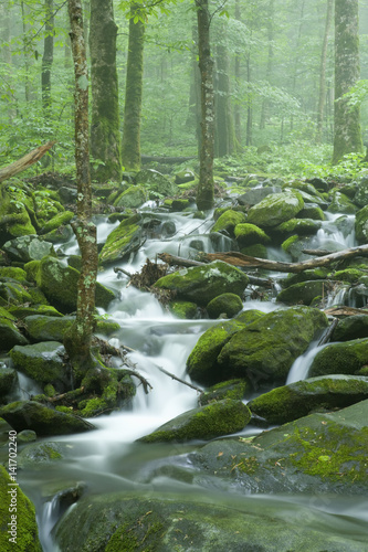 In de dag Olijf Stream, Spring Landscape, Great Smoky Mountains NP