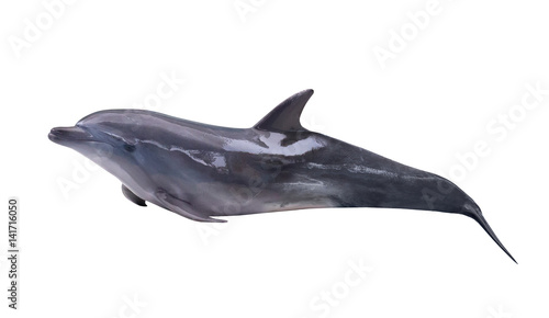 Foto op Aluminium Dolfijn dark gray isolated lying dolphin