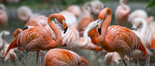 Poster de jardin Flamingo Pink flamingos in group