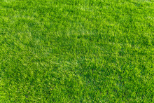 Afternoon Green Natural Lawn -...