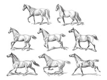 Horse Collection / Vintage Ill...