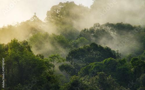 gleboki-las-tropikalny