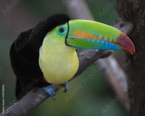 La pose en embrasure Toucan Toucan