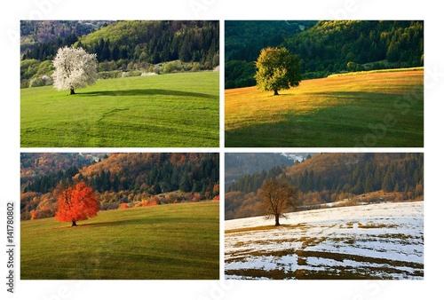 Fotografie, Obraz  Four season single spring cherry tree on meadow