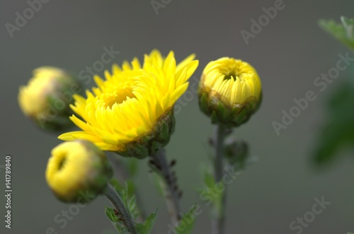 Fototapety, obrazy: yellow flowers