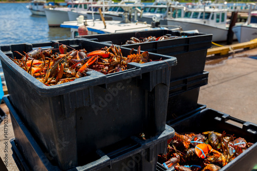 Lobsters on the wharf in rural Prince Edward Island, Canada.