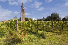 Europe, Italy, Veveto, Venice Lagoon. The Vineyard Of Mazzorbo And The Old Bell Tower