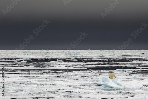 A polar bear climbs an iceberg in the high Arctic Ocean, north off Spitsbergen, Svalbard.