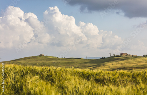 Keuken foto achterwand Weide, Moeras Ears of corn frame the green rolling hills and farm houses Crete Senesi (Senese Clays) province of Siena Tuscany Italy Europe