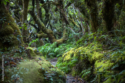 Foto auf AluDibond Neuseeland Native bush, North Island, New Zealand