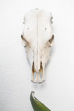 The Horse Skull On The Wall
