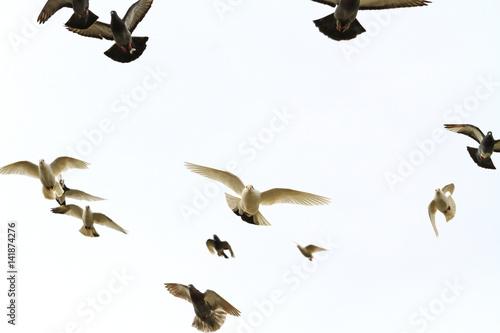 Valokuva  flock of doves flying in the forehead
