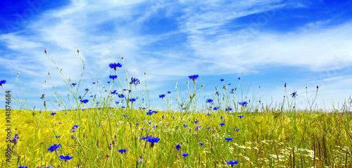 lato-krajobraz-z-kwiatu-meadof-i-chmurami