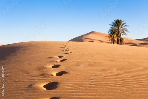 palmiers dans le désert et empreintes de pas Canvas Print