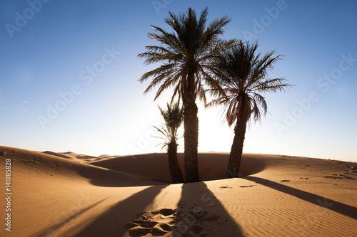 Poster Lieu connus d Asie palmiers dans le désert et dunes de sable