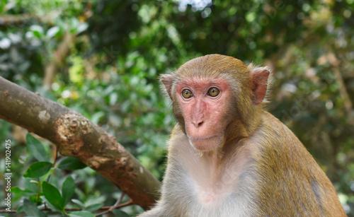 In de dag Macaque monkey portrait