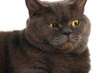 Portrait Of A Surprised Cat
