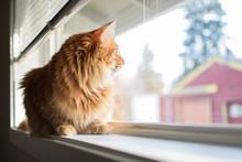 Fluffy Long Hair Orange Cat Si...