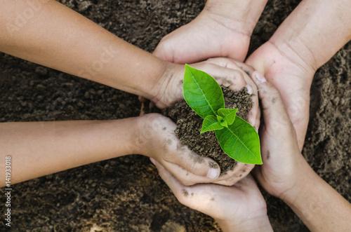 Fotografie, Obraz  Growing concept eco Group hand  children planting together on soil backgroud
