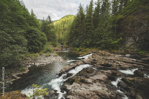 Photo  River in a Lush Forest