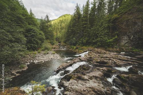 Fotografía  River in a Lush Forest
