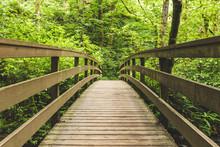 Wooden Bridge In Lush Forest
