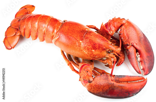 Poster Schaaldieren Red lobster isolated on white background