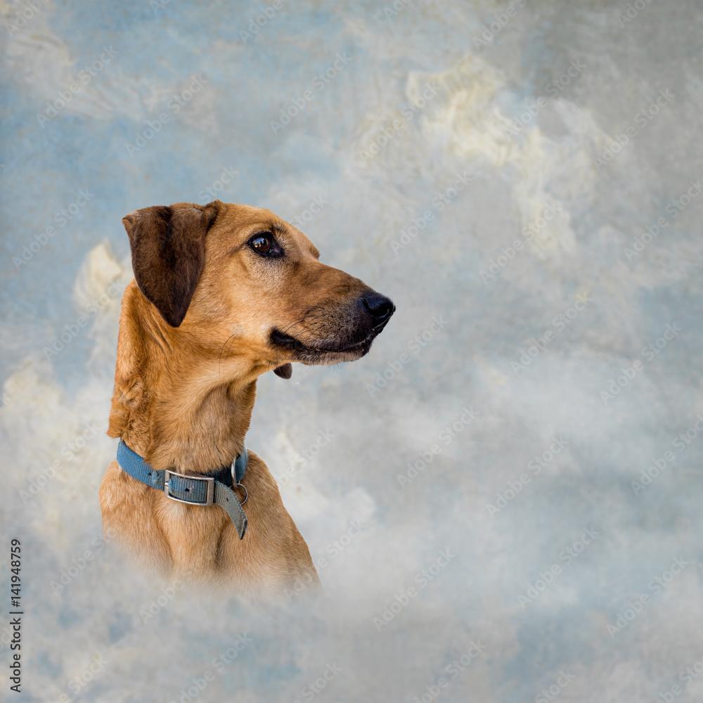 Sky Background Pet Heaven Conce
