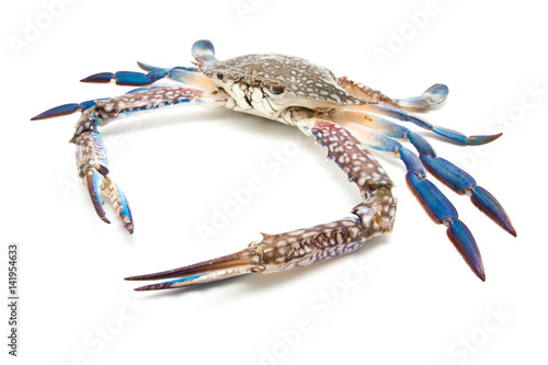 Close up blue crab isolated on white