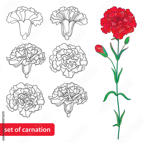 Vector set with outline Carnation or Clove flower, bud and leaves in black and red isolated on white background Wallpaper Mural