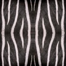 Oriental Abstract, Seamless Wallpaper Tiles, Zebra Stripes Pattern Or Texture For Safari Background, Natural Background, Wallpaper, Rug, Design, Print, Carpet, Template, Etc.