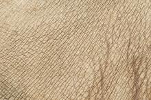 Rhino (white Rhinoceros) Skin Texture