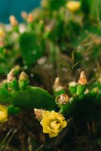 Wedding Rings On A Flowering C...