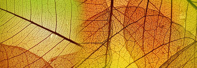 Panel Szklany Podświetlane Do przedpokoju autumn leaf texture
