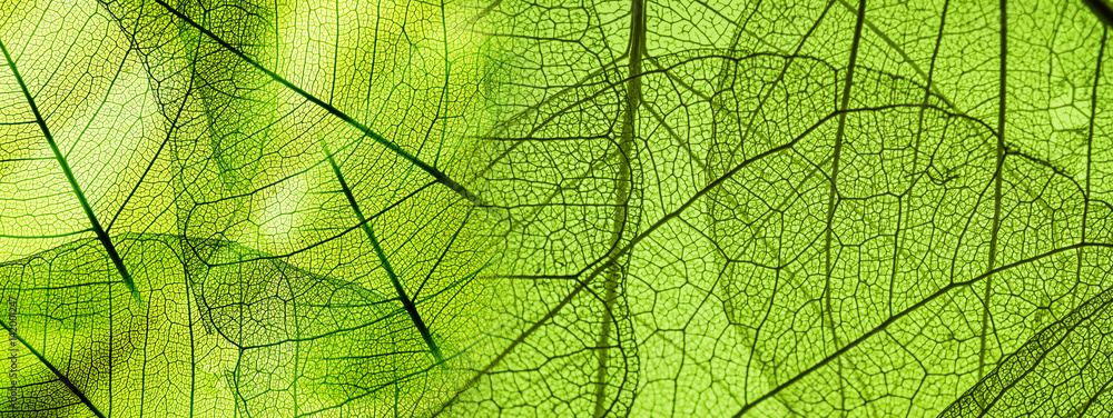 Fototapeta green foliage texture