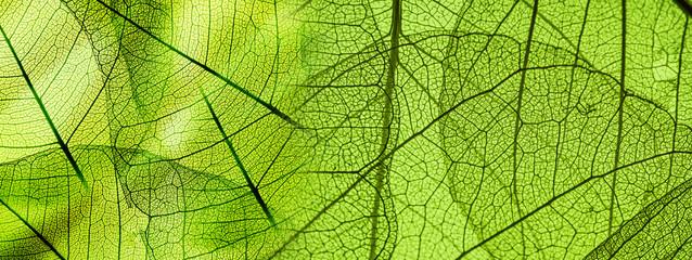 Panel Szklany green foliage texture