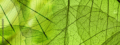 Door stickers Macro photography green foliage texture