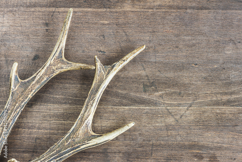 Foto op Canvas Jacht deer antlers on a wooden background with copy space