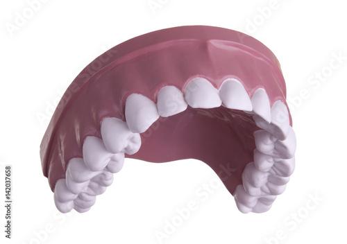Fotografie, Obraz  Model of upper teeth