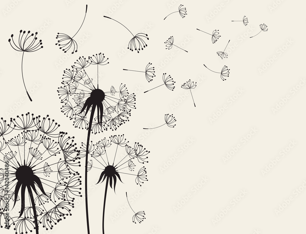 Fototapety, obrazy: Abstract Dandelions dandelion with flying seeds
