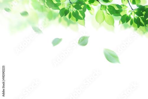 Fotomural 新緑 春 背景イメージ